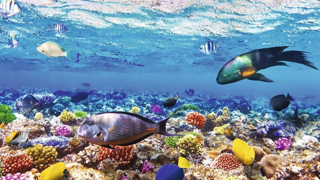 коралловый риф Шарм-эль-Шейх